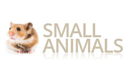 Small Animal Products